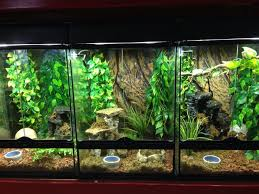 crested gecko tanks