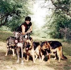Image result for shahrukh dog