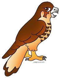 hawk clipart. Brilliant Clipart Image Result For Baby Hawk Clipart For Hawk Clipart R