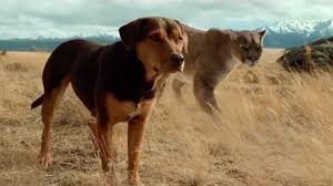 Download A Dog's Way Home Torrent