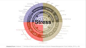 Hpa Axis Hpa Axis Dysfunction How Stress Can Cause Weight Gain Fatigue