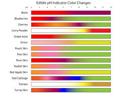 Red Cabbage Juice Indicator Chart How To Make A Red Cabbage Ph Indicator