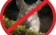 Самара Заказать курсовую и дипломную работу в Омске цена р  Избавим от крыс и мышей