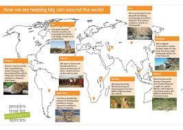 Saving Big Cats And Wild Dogs Peoples Trust For