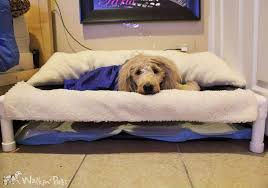 dog incontinence bed. Perfect Incontinence Lucy In SleePee Time Bed And Dog Incontinence