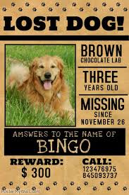 how to make lost dog flyers create pet flyers by customizing easy to use templates browse