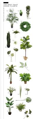 plants for office cubicle. Office Cubicle Plants. Great Plants The Best Realistic Faux Room For Tuesday