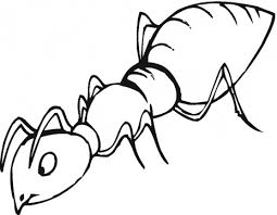 Ant Coloring Page Ant Free Printable Coloring Pages Animals