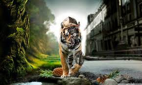 lion hd images hq willene ohman