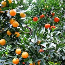 A Real Grafted Fruit Tree  Gardening  Pinterest  Fruit Salad How To Graft Fruit Trees With Pictures