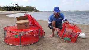 how to set up crab pots to catch mud crabs sand crabs