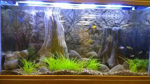 full size of backgrounds universal rocks fish tank background diy beautiful images 50 beautiful fish tank