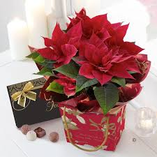 poinsettia gift bag with chocolates blakes of bookham great bookham surrey