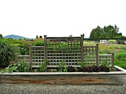 the center raised bed at mount hood gardens in late june the tiered trellis supports