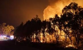 Image result for aus bushfires