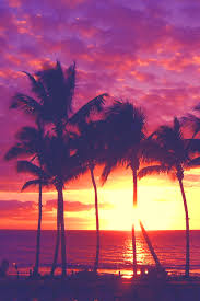 palm trees tumblr vertical. Paradise. Hawaiian SunsetPalm Trees Palm Tumblr Vertical