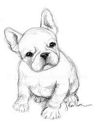 bulldog puppy drawing. Contemporary Puppy Just A Quick Sketch Of French Bulldog Puppy On Sunday Afternoon   Simple In 2B Pencil Intended Puppy Drawing T