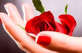 Resultado de la imagen para una flor que represente la amistad