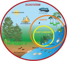 Ecosystem Chart Used To Show Students Exactly What Makes Up
