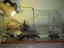 Le mie tartarughe