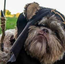 bubba could totally pull off the ewok costume but s hoods