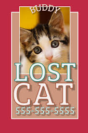 Lost Cat Flyer Lost Cat Template Postermywall