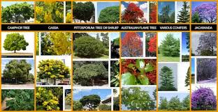 What Are Different Examples Of Trees And Shrubs Quora