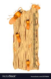 Kids Height Chart With Termite On Soft Wood