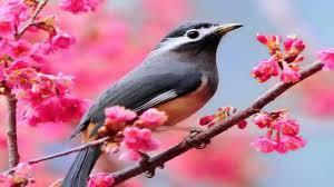 birds wallpaper. Wonderful Birds Intended Birds Wallpaper