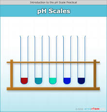 Bicarbonate Indicator Colour Chart Introdution To The Ph Scale Science Practical Expiriment