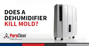 Can dehumidifiers remove mold?