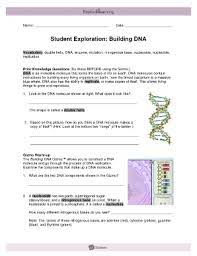 Building dna answer key vocabulary: Student Exploration Building Dna Gizmo Answers Key Pdf Fill Online Printable Fillable Blank Pdffiller