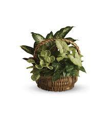 emerald garden basket t106 1a