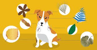 Herbs For Dog Skin Problems