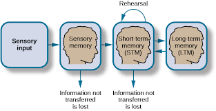 Long Term Memory Chart Storage Introduction To Psychology