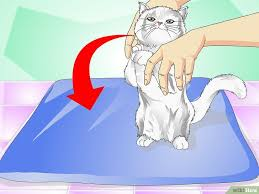 """Résultat de recherche d'images pour """"faire avaler un cachet à un chat"""""""