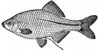 Рыбы р Сучан и их ловля Партизанск eu неофициальный форум города Прикрепленное изображение