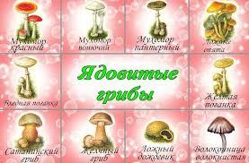 Сообщение по окружающему миру на тему Наша безопасность  грибы