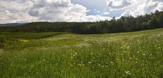 grass field. Grass Field By Jorago O