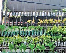 veggies through urban gardening