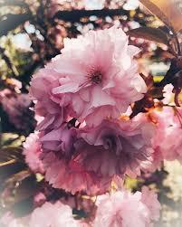 Blumen Können Nicht Blühen Ohne Die Wärme Der Sonne Menschen Kö