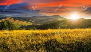 tall grass field sunset. Mountain Summer Landscape. Meadow With Tall Yellow Grass And Forests On Hillside In Sunset Field