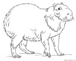 How To Draw A Capybara Step By Step Drawing Tutorials Learn To
