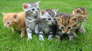 kitten gatti pet gato gatto cat s babycat cute pets four cats kittens cutie super