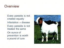 Goat Lice Baking Soda For Goats Goat Lice Treatment Natural Bitflex Club