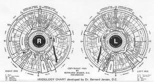 Iridology Chart Pdf Image Result For Iridology Pdf Iridology Chart Iridology