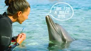 Image result for swimming with dolphin pictures