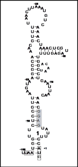 Загрузить escherichia coli курсовая o avgustin Лечащий Биржа курсовых дипломных проектов проблем Регуляторами роста кишечнике являются различные экзоэнзимы бактериоцины синтезируемые отличаются массой