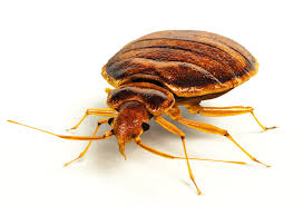 What Are The Types Of Bed Bug Treatment Corder Pest Control