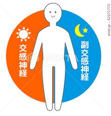 自律神経 人体図のイラスト素材 [62072770] - PIXTA